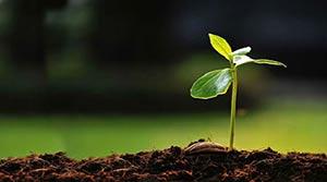 Plants Hire